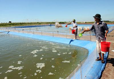 Phòng, chống dịch bệnh thủy sản: Chưa được coi trọng đúng mức